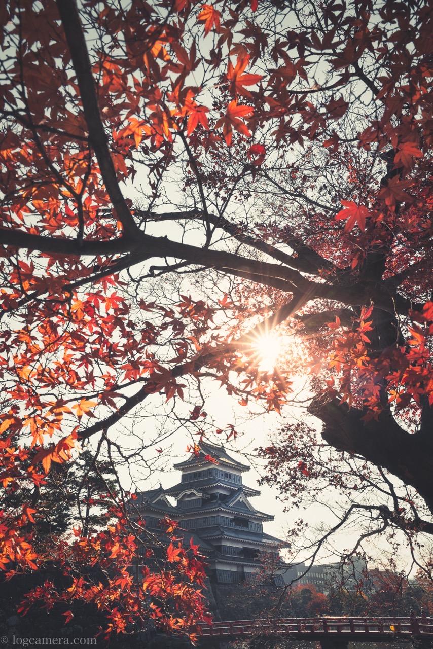 松本城の紅葉