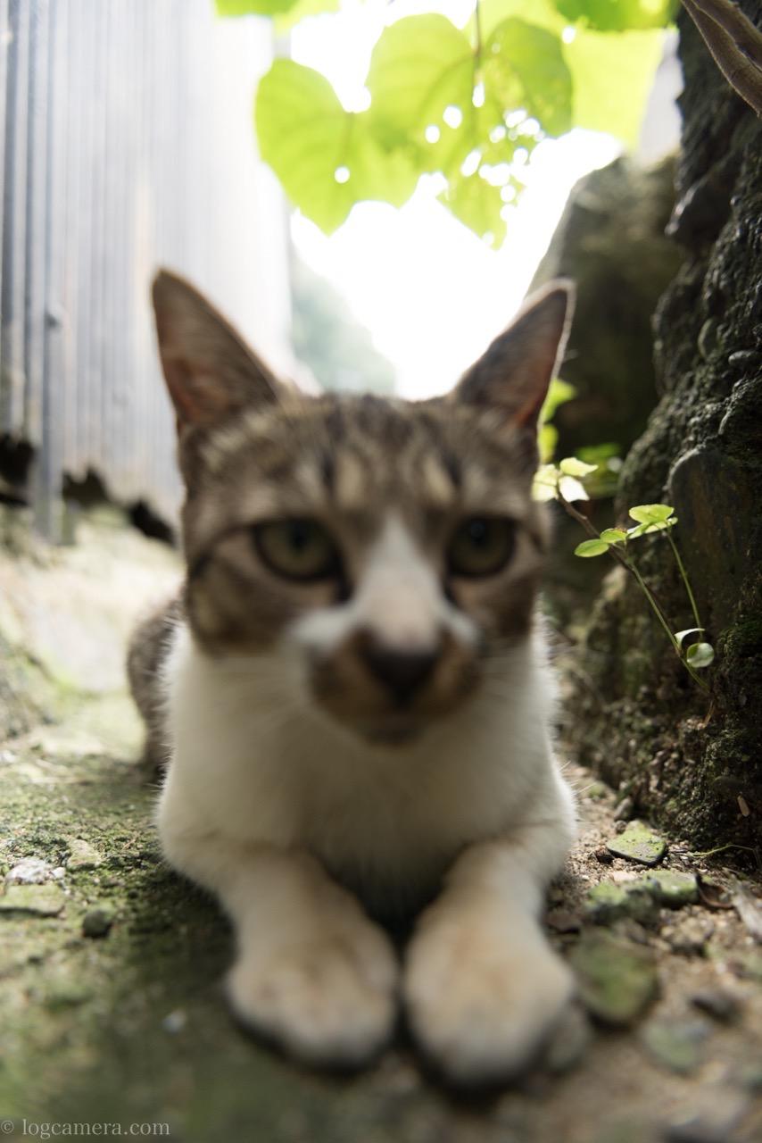 猫 ピンぼけ